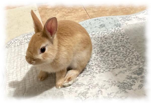 ウサギみのり